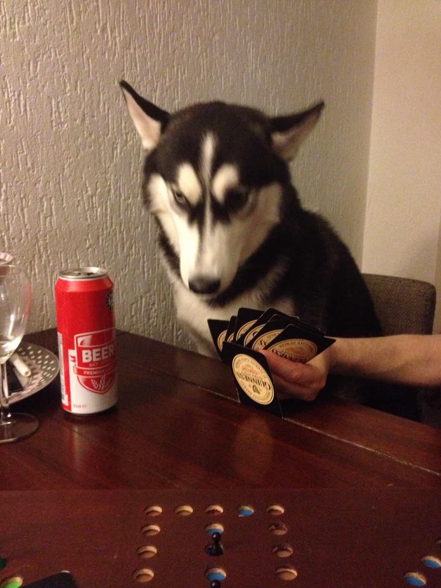 hond aan tafel met blik bier